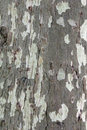 Forest bark sort Royalty Free Stock Photo
