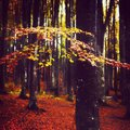 Forest a beautiful autumn day in the Royalty Free Stock Photography