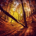 Forest a beautiful autumn day in the Royalty Free Stock Photos