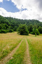 Forest and beautiful hillside scenary Royalty Free Stock Photo