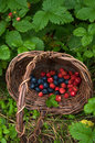 Forest berry in a brown basket Royalty Free Stock Image