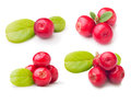 Forest berry cowberry with leaves set isolated Stock Images