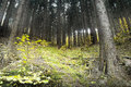 Forest in bezrucovo udoli valley in autumn czech republic Royalty Free Stock Images