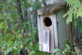 Forest Bird House Royalty Free Stock Images