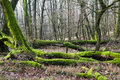 Forest bottom covered by moss broken trees lying carpathian Royalty Free Stock Photos