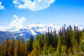 Forest with breathtaking swiss mountains fir tree view beautiful on the background Stock Photos