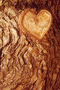 Forest brown wooden background texture forest wooden tree bark with sign of the heart love in nature Royalty Free Stock Photos
