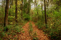 Forest bypath covered with leaves foot path Royalty Free Stock Image