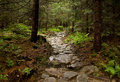 Forest bypath made of stones stone track in mountain Stock Images