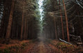 Forest bypath through trees Stock Images