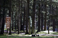 Forest campgrounds of trees at holiday park on joint base lewis mcchord jblm in tacoma washington old mcchord air force base now Stock Photo