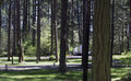 Forest campgrounds of trees at holiday park on joint base lewis mcchord jblm in tacoma washington old mcchord air force base now Stock Image