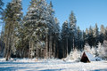 Forest clearing in winter with high trees and a shelter snow covered Royalty Free Stock Images