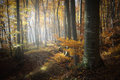 Forest with colorful leaves in autumn beautiful Royalty Free Stock Photo