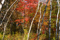 Forest Colors in the Fall Royalty Free Stock Photography