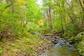 Forest creek in autumn blue ridge mountains usa Stock Photography