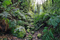 Forest in cubo de la galga palma canary islands spain Royalty Free Stock Photo