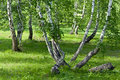 Forest With Curved Trees