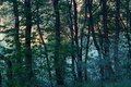 Forest At Dawn In Nature Area ...