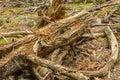 Forest dead y madera de decaimiento Imágenes de archivo libres de regalías