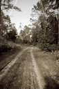 Forest dirt road in sepia Royalty Free Stock Images
