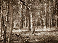 Forest Of Dreams Royalty Free Stock Photo