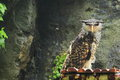 Forest eagle owl the sitting on the booth Royalty Free Stock Photos