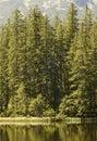Wald rand