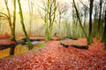 Forest in the fall - small river and sun Royalty Free Stock Photo