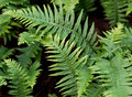 Forest fern Stock Images