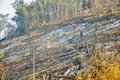 Forest fire alarming trace of tropical and dangerous Stock Images