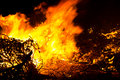 Forest Fire Burning Royalty Free Stock Photo