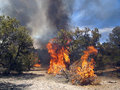 Forest fire a burning in a pinyon juniper shrub land Stock Images