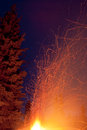 Forest fire danger hot spark trails from campfire orange bursting up big bonfire threatening to ignite coniferous tree in Stock Photos