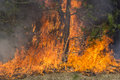 Forest fire and dry grass on Royalty Free Stock Images