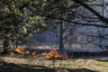 Forest fire and dry grass on Stock Photos
