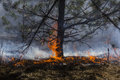 Forest fire and dry grass on Stock Photography