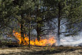 Forest fire and dry grass on Royalty Free Stock Photography