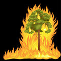 Forest Fire, fire in forest landscape damage, nature ecology disaster, hot burning trees, danger forest fire flame with Royalty Free Stock Photo