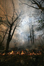 Forest fire nature ash burning fireman working Royalty Free Stock Photography