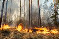 Forest fire in progress Royalty Free Stock Photo