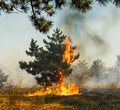 Forest Fire, Wildfire burning tree in red and orange color. Royalty Free Stock Photo