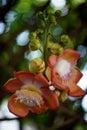 Forest flower Fotografie Stock