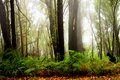 Forest Fog Royalty Free Stock Photo