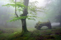 Forest with fog in spring Royalty Free Stock Images