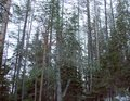 The forest at the foot of the mountain range of the High Tatras. Slovakia.