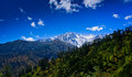 Forest front mount gongga mount gongga high m highest mountain sichuan china nickname king mountains sichuan Stock Photography