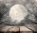 Forest with full moon Royalty Free Stock Photo
