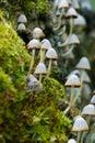 Forest fungi Stock Photo
