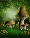 Forest glade with mushrooms Stock Photo
